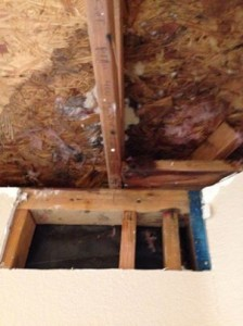 Mold Cleanup South Coast Restoration, Inc.